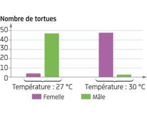 Nombre de tortues mâles et de tortues femelles en fonction de la température d'incubation des œufs