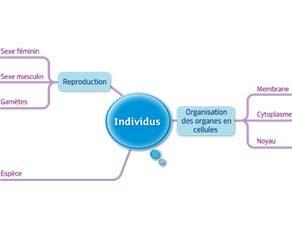 Individus : acquis du cycle 3