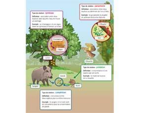 Diversité des relations entre les espèces d'un écosystème