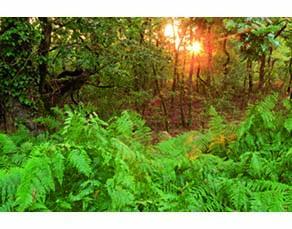 L'écosystème forestier du parc régional de Scarpe-Escaut