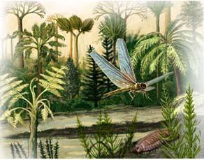 Reconstitution d'un paysage datant de 310 millions d'années dans le parc régional de Scarpe-Escaut