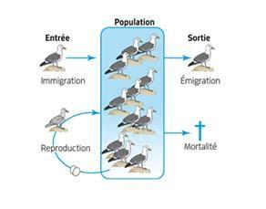 Causes de la variation des effectifs d'une population de goélands argentés en France