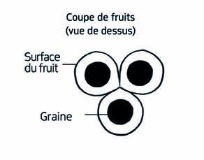 Caractéristiques des fruits du savonnier