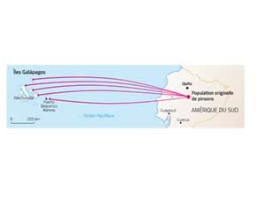 Observations de Darwin sur les pinsons des îles Galapagos