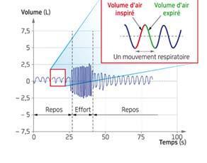 Évolution du rythme respiratoire au repos et en effort
