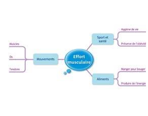 Effort musculaire : acquis du cycle 3