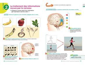 Le traitement des informations reçues par le cerveau