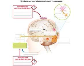 Système nerveux et comportement responsable - à compléter