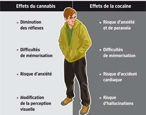 Effets sur l'organisme d'une prise de cannabis ou de cocaïne