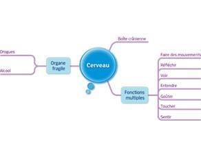 Cerveau : acquis du cycle 3