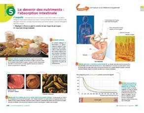 Le devenir des nutriments : l'absorption intestinale