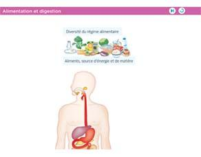 Alimentation et digestion