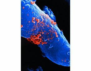 Nombreux virus sortant d'une cellule humaine