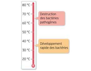 Effet de la température sur la survie des bactéries