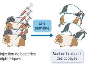 Expérience 1 de Emil Adolf von Behring sur la défense de l'organisme contre la bactérie diphtérique