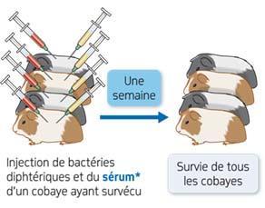 Expérience 2 de Emil Adolf von Behring sur la défense de l'organisme contre la bactérie diphtérique