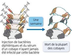 Expérience 3 de Emil Adolf von Behring sur la défense de l'organisme contre la bactérie diphtérique