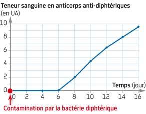 Teneur en anticorps anti-diphtériques dans le sang d'un cobaye survivant à l'injection de bactéries diphtériques