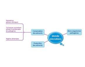 Monde microbien : acquis du cycle 3