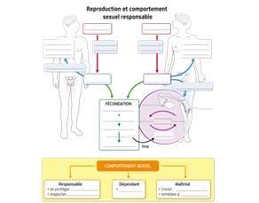 Reproduction et comportement sexuel responsable - à compléter