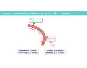 Le contrôle hormonal de l'appareil reproducteur