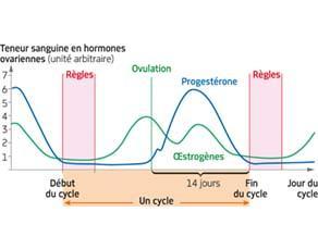 Hormones ovariennes et contrôle de l'activité de l'utérus