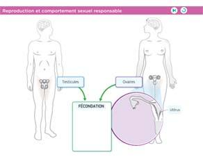 Reproduction et comportement sexuel responsable