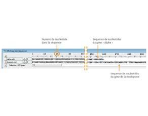 Comparaison de séquences nucléotidiques de deux gènes