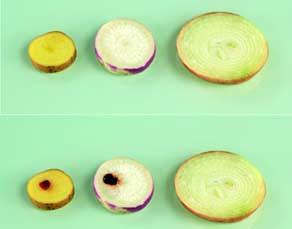 Résultat de la recherche de l'enzyme peroxydase sur différents organes végétaux