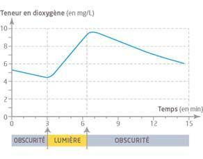 Teneur en dioxygène d'une solution de chlorelles à l'obscurité et à la lumière