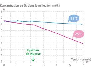 Évolution de la teneur en dioxygène d'une solution de levures