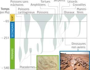 Évolution du groupe des vertébrés au cours des temps géologiques