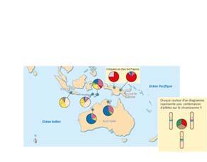 Fréquences de certains allèles du chromosome Y dans plusieurs populations d'Océanie