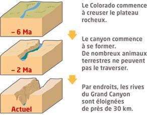 La formation du Grand Canyon du Colorado