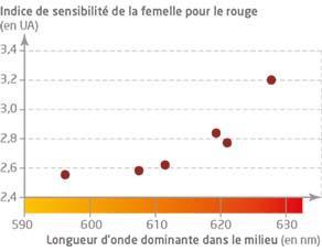 Capacité de perception du signal « tache rouge » par les femelles en fonction de la longueur d'onde du milieu