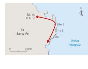 Sites d'études sur l'île Santa Fé aux Galápagos