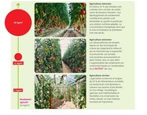 Différents modèles de culture de la tomate