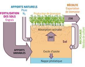 Estimation des quantités d'azote dans un agrosystème champ de maïs