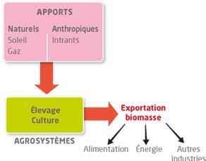Le fonctionnement d'un agrosystème