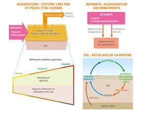 Structure et fonctionnement des agrosystèmes