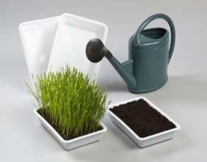 Matériel pouvant être utilisé pour montrer que les végétaux ont un rôle dans la protection du sol