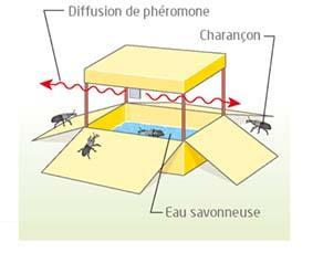 Piège à rampe avec phéromone