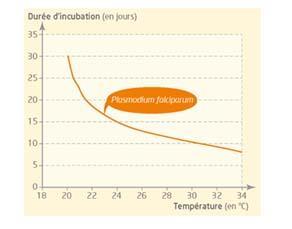 Paludisme et durée d'incubation de l'agent pathogène