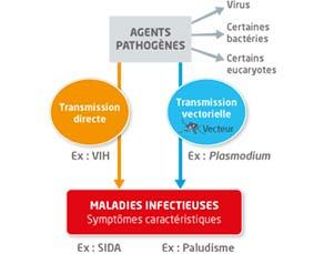 Deux types de maladies infectieuses