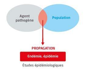 Des études pour comprendre la propagation des maladies infectieuses