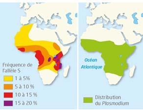 Carte de la fréquence de l'allèle S et de la présence du Plasmodium en Afrique