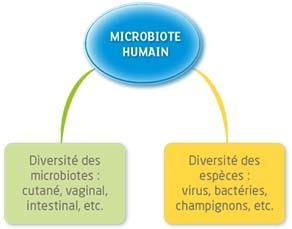La diversité du microbiote