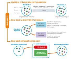 Microbiote et santé
