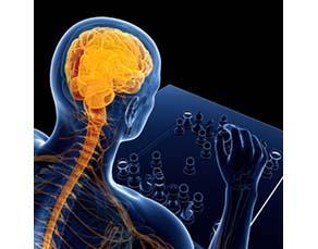 Le cerveau intègre des informations