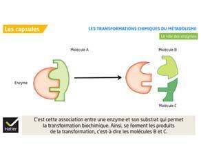 Les transformations chimiques du métabolisme
